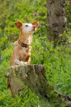 FionaL-Dogs action-5804-TopazLabs.jpg